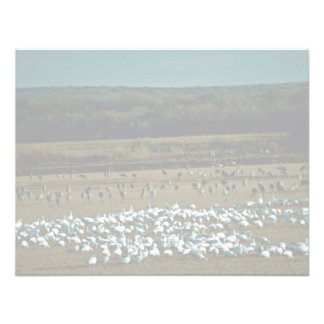 Snow Geese and Sandhill Cranes Announcement