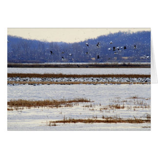 Snow Geese at Sunrise at Squaw Creek Wildlife Card