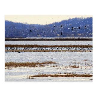 Snow Geese at Sunrise, Squaw Creek Refuge Postcard