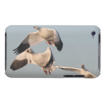 Snow Geese Birds Wildlife Animals Flying Case-Mate iPod Touch Case