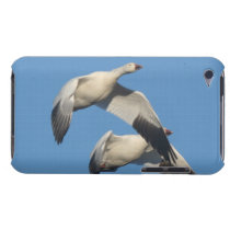 Snow Geese Birds Wildlife Animals Flying iPod Case-Mate Case