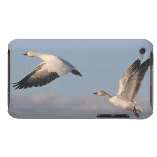 Snow Geese Birds Wildlife Animals Flying iPod Touch Case