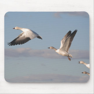 Snow Geese Birds Wildlife Animals Flying Mouse Pad