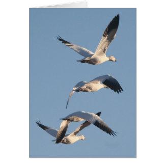 Snow Geese Birds Wildlife Animals Photography Card