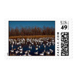 Snow Geese Bosque Del Apache National Wildlife Ref Stamp