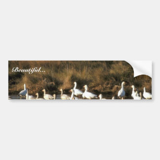 Snow Geese Bumper Sticker