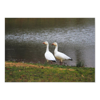 Snow Geese by the Pond Card