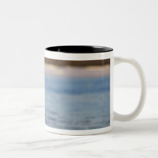 snow geese, Chen caerulescens, pair on a Two-Tone Coffee Mug