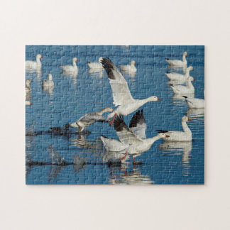 Snow Geese (Chen Caerulescens) Taking Off Jigsaw Puzzle