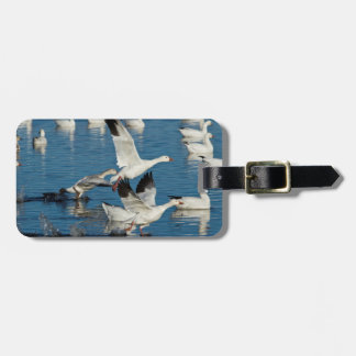 Snow Geese (Chen Caerulescens) Taking Off Luggage Tag