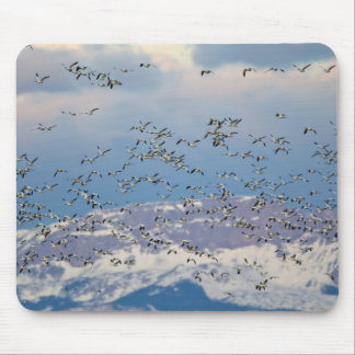 Snow geese during spring migration 2 mouse pad