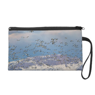 Snow geese during spring migration 2 wristlet purse