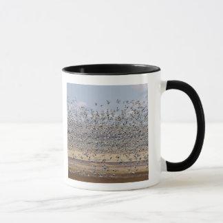 Snow geese during spring migration 3 mug