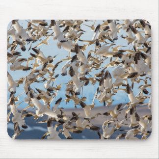 Snow Geese Fill The Sky After Feeding In Barley Mouse Pad