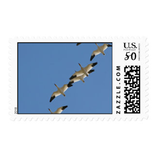 Snow Geese Flying South for the Winter Postage