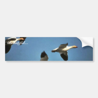 Snow Geese in Flight Car Bumper Sticker
