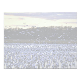 Snow geese 4.25x5.5 paper invitation card