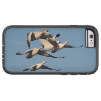 Snow Geese iPhone 6 Case