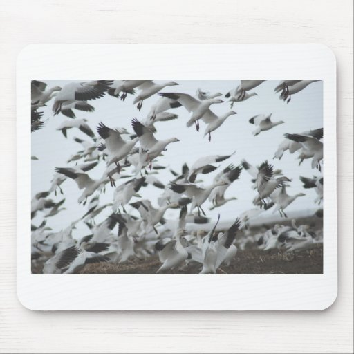 Snow Geese Migration Mousepads