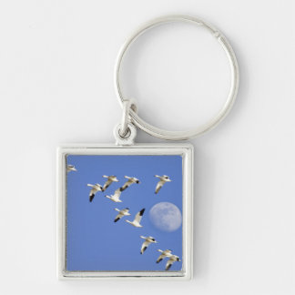 Snow geese take flight at Freezeout Lake NWR Keychain