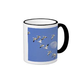 Snow geese take flight at Freezeout Lake NWR Ringer Coffee Mug
