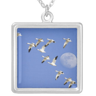 Snow geese take flight at Freezeout Lake NWR Silver Plated Necklace