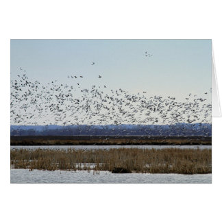 Snow Geese Taking off at Squaw Creek Wildlife Card