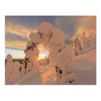 Snow Ghosts In The Whitefish Range Postcard