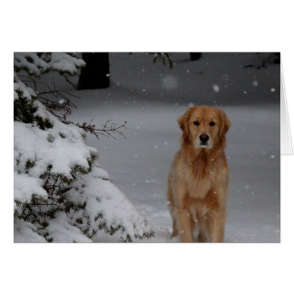 Snow Golden Greeting Card