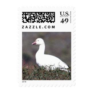 Snow Goose Captured Standing Stamp