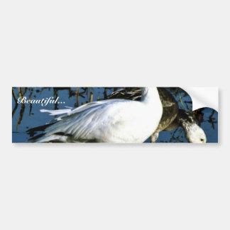 Snow Goose Car Bumper Sticker