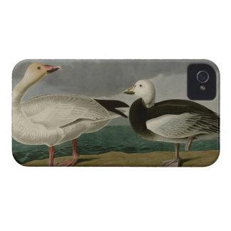 Snow Goose Case-Mate iPhone 4 Case
