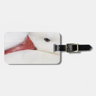 Snow Goose Chen caerulescens), captive in Luggage Tag