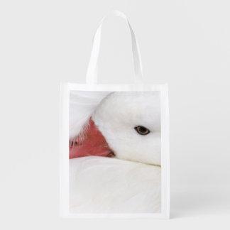 Snow Goose Chen caerulescens), captive in Market Totes