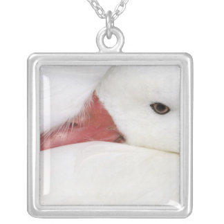 Snow Goose Chen caerulescens), captive in Silver Plated Necklace
