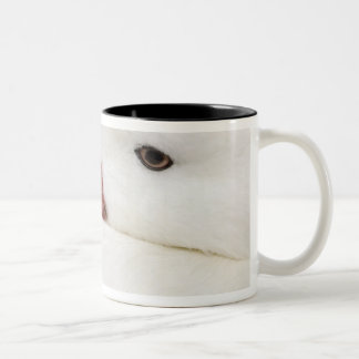 Snow Goose Chen caerulescens), captive in Two-Tone Coffee Mug