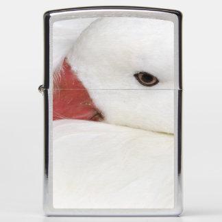 Snow Goose Chen caerulescens), captive in Zippo Lighter