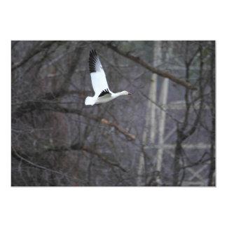 Snow Goose in Flight Card
