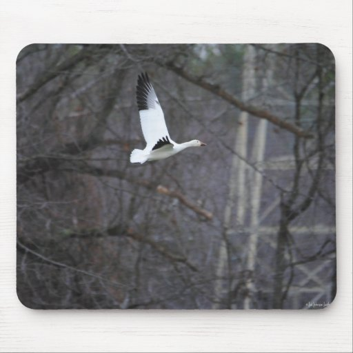 Snow Goose in Flight Mouse Pad
