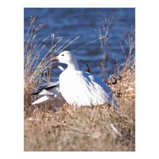 Snow Goose Letterhead
