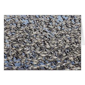 Snow Goose migration, Washington State, USA Greeting Card