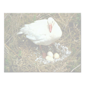 Snow Goose on Nest 4.25x5.5 Paper Invitation Card
