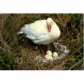 Snow Goose on Nest Statuette