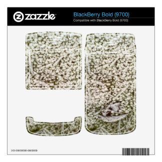 Snow grass skin for BlackBerry