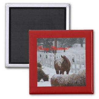 Snow horse, Merry Christmas! 2 Inch Square Magnet