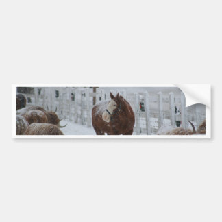 Snow Horse, Merry Christmas from Massachusetts! Bumper Stickers