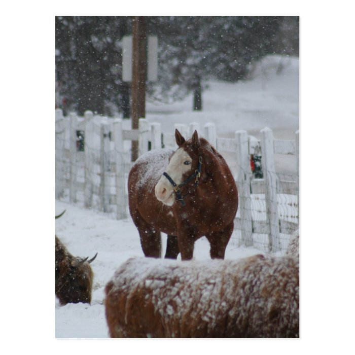 Snow Horse, Merry Christmas from Massachusetts! Postcard