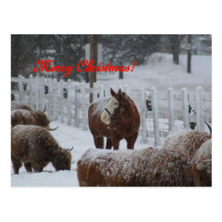 Snow horse, Merry Christmas! Postcard