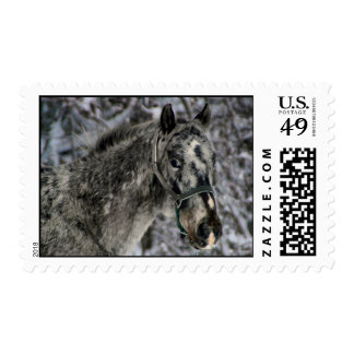 Snow Horse Stamp