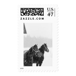 Snow Horses Stamp